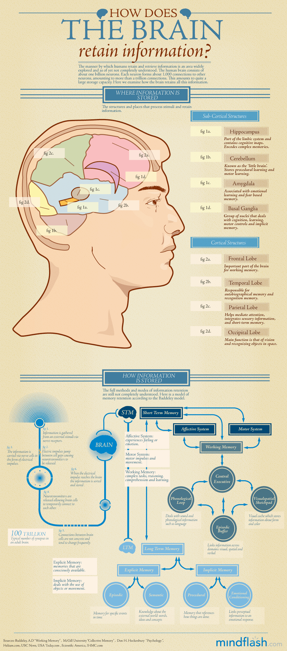 How Does the Brain Retain Information Infographic