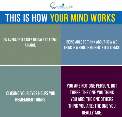 How Our Minds Work Infographic