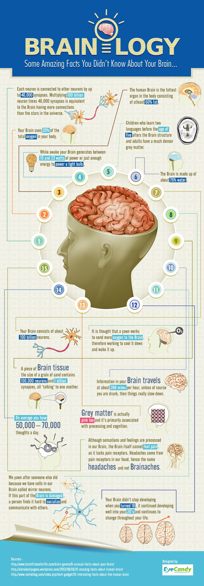 Intriguing Facts About The Human Brain Infographic