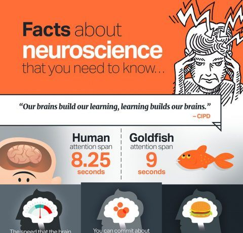 How to Integrate Neuroscience into Your eLearning Infographic